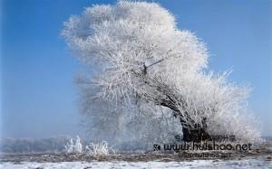喜欢雪,喜欢那种温暖而胸怀博大的感觉