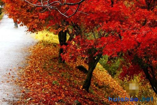 秋季的小路,迈着轻盈的步子,仿佛带着收获的希望和喜悦。