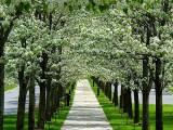生活只是单行道,当你感觉前路一片渺茫的时候,却没有挽救的余地。