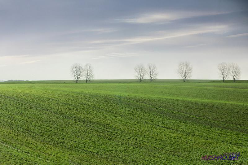 让生命之树更加完整,让幸福得以永存
